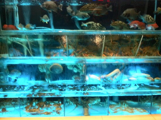Budaoweng Hot Pot Cuisine: Live sea food tank.