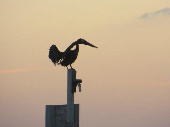 Colinda Cabanas: Beautiful Bird!