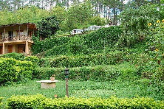 Woods Resort: lush greens
