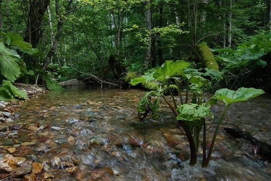 Biogradska Gora National Park : Речка в лесу