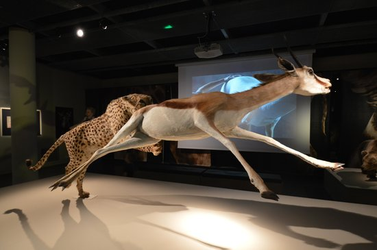 Musee d'histoire naturelle de La Rochelle : Jolie scénographie