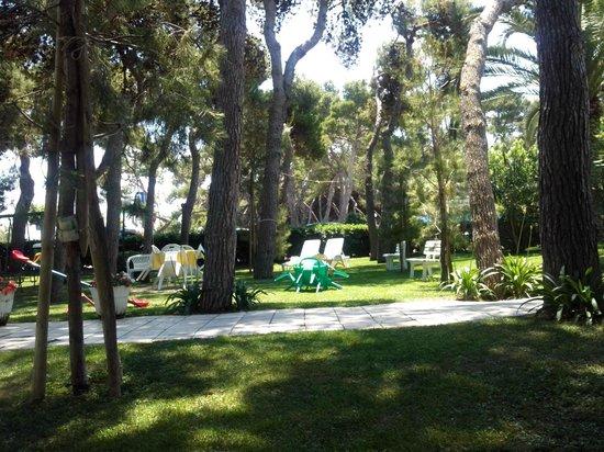 Hotel Fabiola: Solo una parte della pineta