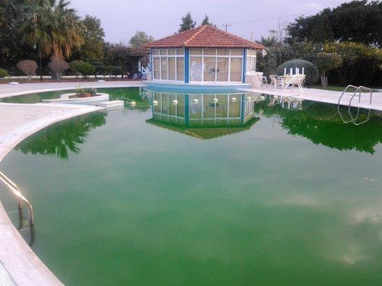 Hotel Sempati: Pool area.  Pool green