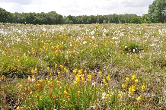 Hothfield Heathlands Nature Reserve: Main bog
