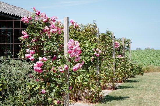 Bakkelund Bed & Breakfast: Lovely roses for every room