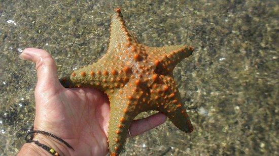 Areia Branca Lodge: Starfish
