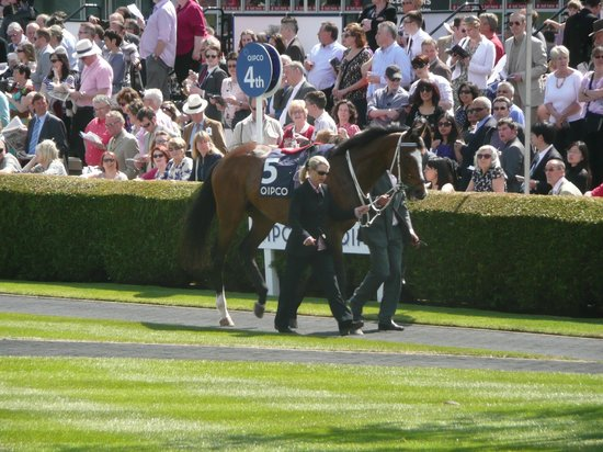 National Horseracing Museum: Introducing the horses