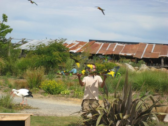 Zoo La Boissière du Doré : Spectacle d'oiseaux