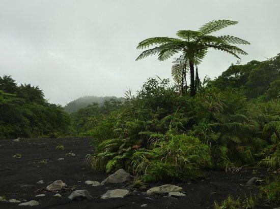 Vanuatu: Ash plain