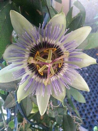 Pension Andreas : fiori all'entrata
