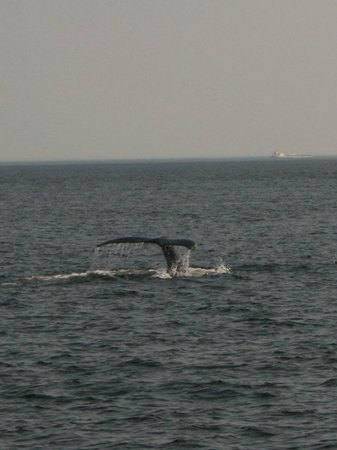 Auberge des Peupliers : Voici la baleine Aramis