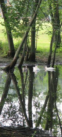 Oakwood Escape: Pond at the camp