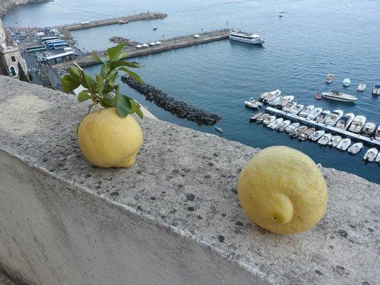 Il Porticciolo di Amalfi: Huge Amalfi Lemons..:)