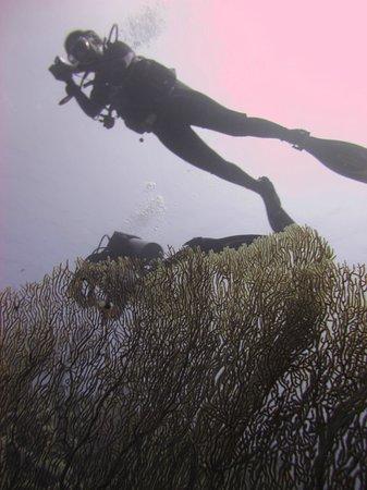 Desert Divers Dahab: Boat dive