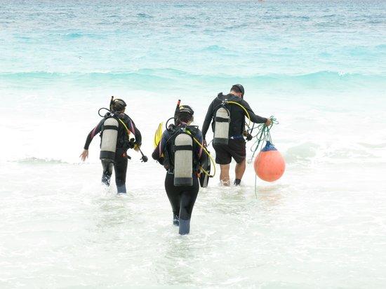Calypso Diving School: Beach Dive