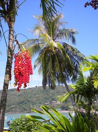 Phi Phi Island Cabana Hotel: Vista da praia, desde a piscina do hotel