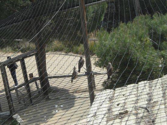 Cim d'Aligues: Varias aves por ver
