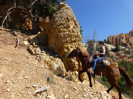 Mecham Outfitters: Some of the trails are far steeper than this one