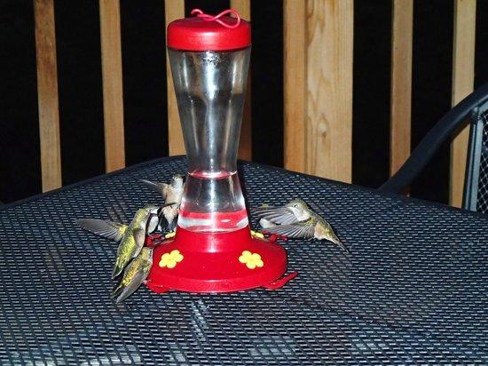 Edgewood Inn: Humming birds on the Patio