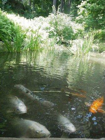 Winterthur Museum, Garden & Library: Koi pond