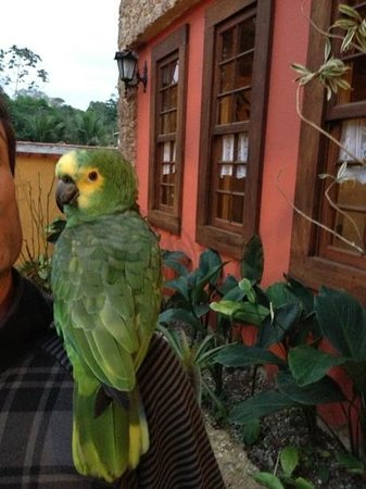 Pousada Cicerone: Louro, the famous & friendly parrot