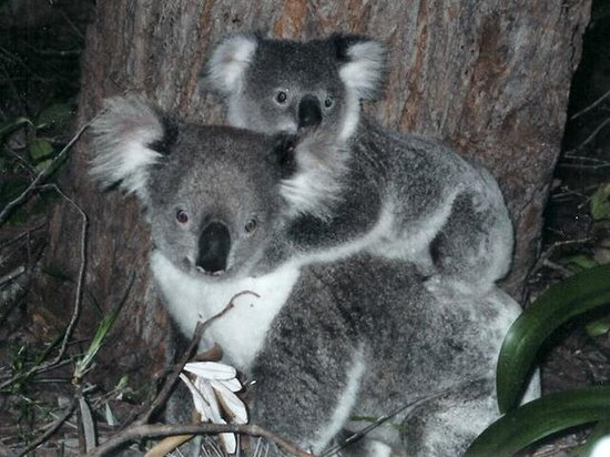 Bombah Point Eco Cottages: The Myall Lakes National Park is famous for its koalas, whale watching, birdlife and dolphins.