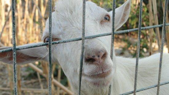 Chrispy World: Прекрасное развлечение для всей семьи- кормление коз