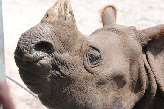 Giraffe Ranch: A friendly rhino