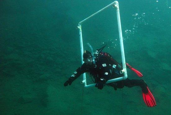Delfinus Plongee: Plongeur 3