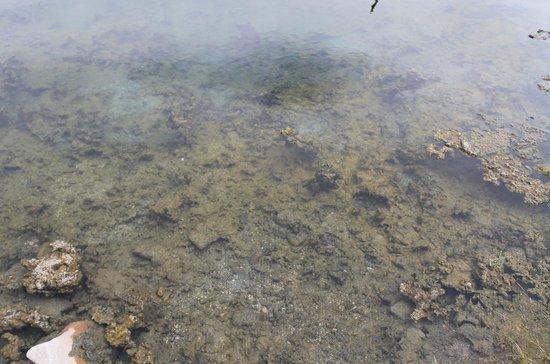 Chena Hot Springs Resort: Natural hot spring