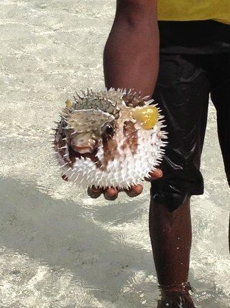 Jumbo Watamu: Pesce Palla !!!!
