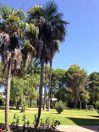 Ayre Hotel Cordoba: Giardino