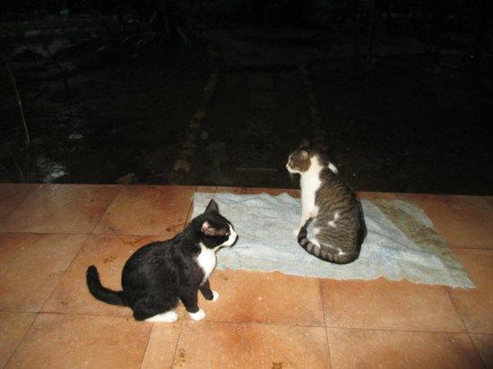 Eco Venao: Friendly cats