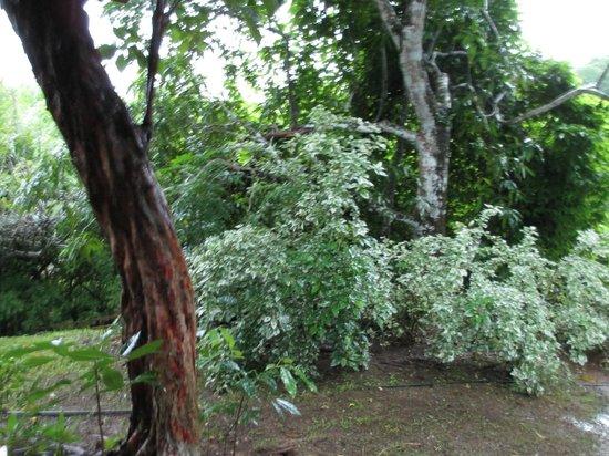 Eco Venao: Trees!