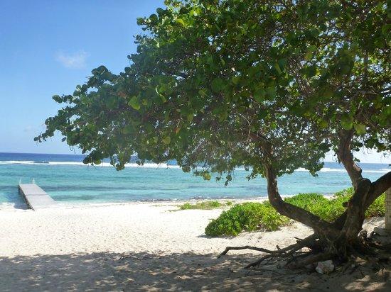 Turtle Nest Inn: Spotts beach