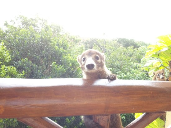 Catalonia Royal Tulum Beach & Spa Resort: Cute little visitor