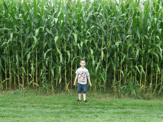 La Quinta Inn & Suites Lancaster: My Grandson enjoyed the Corn Field next to the parking lot!