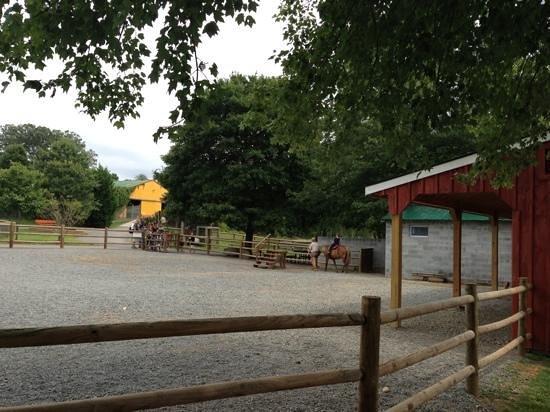 Roer's Zoofari: pony rides