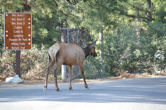 Hualapai Mountain Park: Welcome committee