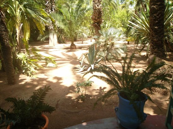 Jardin majorelle picture of jardin majorelle marrakech for Jardin 63