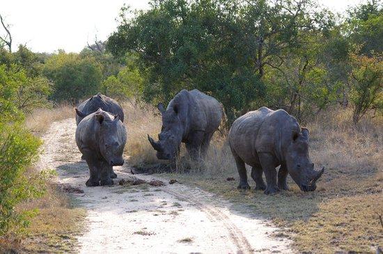 Dulini Lodge : Rhinoceros
