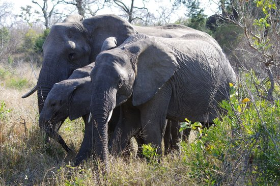 Dulini Lodge : Elephants