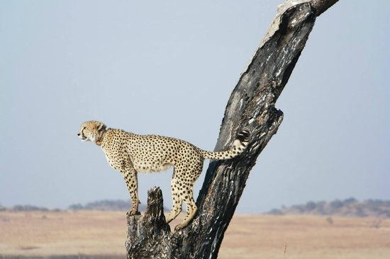 Esiweni Luxury Safari Lodge: Nambiti Game Drives
