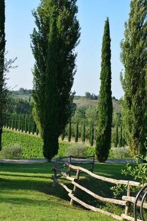 Agriturismo La Sovana: Cypress lined avenue leading to vineyards