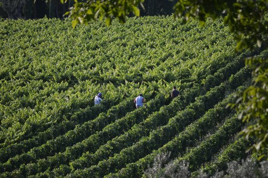 Agriturismo La Sovana : Workers in the vineyards - view from the room