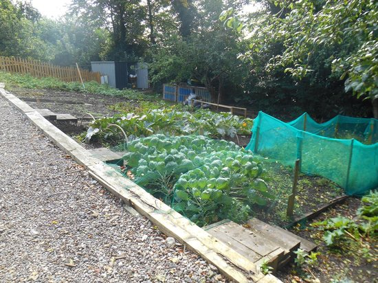 Gabriel House B&B: Vegetable gardens