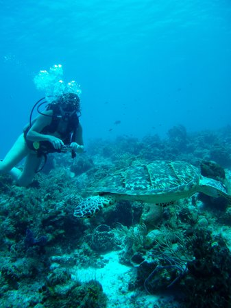 NIrvana Diving School : One of the 5 turtles spotted.