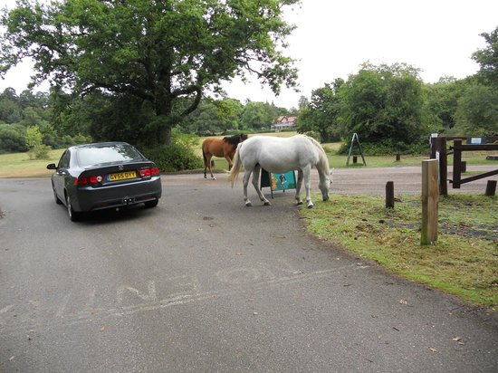 Ashurst Campsite : Greeted at the entrance.