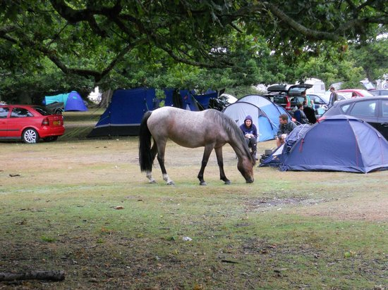 Ashurst Campsite : Large open areas to camp on