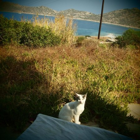Agios Pavlos Studios: La jolie callipola...